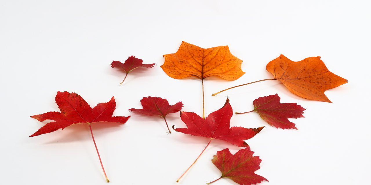 Herbstrabatt 10%